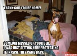 hey thank god youre home someone messed up your bed, I sat right here to protect it in case they came back: Animals, Best Friends, Dogs, Bed, Boxer, Funny Stuff, Funnies