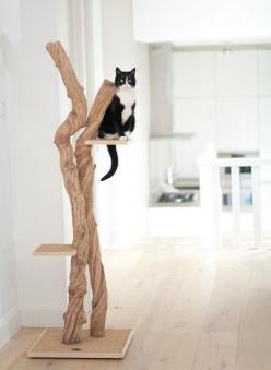 http://woonblog.typepad.com/.a/6a0162fdc1d135970d0167662aae9b970b-pi: Cats, Wood, Tree, Pet, Scratching Post, Chat, Cat Trees, Animal