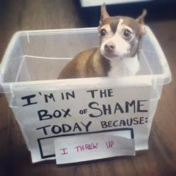 i'm literally dying.... hahahaha: Animals, Dog Shaming, Dogs, Pet, Boxes, Puppy, Funnies