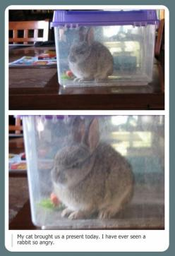 I've never seen a rabbit so angry: Haha Funny, Funny Bunnies, Awww Hehehehe, Angry Cat, Funny Stuff, Angry Rabbit, So Funny, Can'T Stop Laughing