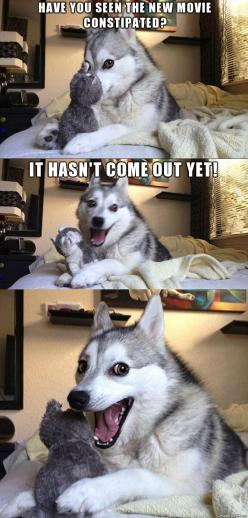I cannot get over this...I love it so much... That adorable face!!!: Animals, Giggle, Dogs, Funny Stuff, Funnies, Humor