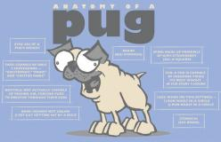 """I disagree with the expressions though.. cuz my babies have a LOT of different expressions. I especially like their """"Are you gonna eat all that?"""" look.  :): Pug Life, Pug Anatomy, So True, Pugs, Dog, Things Pug, Pug Stuff, Animal"""