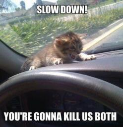 I do chuckle each time I see funny animal pictures {with captions} shared by friends on Facebook. So, why not a little Friday humor, a laugh to start the: Funny Animals, Cats, Slowdown, Slow Down, Funny Cat, Funny Stuff, Funnies, Kitty