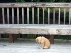 I had a bad day :/  but still sooo cute!: Cat, Animals, Dogs, Stuff, Pet, Funny, Puppys, Now
