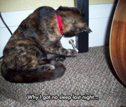 I had to remove the ones in my bedroom for this very reason...Dump A Day Funny Pictures Of The Day - 71 Pics: Animals, Funny Cats, Funny Pictures, Night, Humor, Funnies, Funny Animal, No Sleep