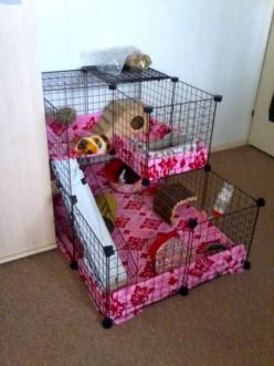 "I have 2 sets of fleece for the cage now, so when I'm cleaning it, I don't have to wait for the fleece to dry <img src=""http://www.guineapigcages.com/photos/images/smile.gif"" alt=""Smile"" />: Guinea Pig Cage Idea, Guinea Pig C"