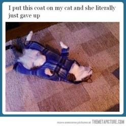 I laughed way more than I should have here.: Cats, Giggle, Funny Pictures, Funny Stuff, Crazy Cat, Animal, Cat Lady