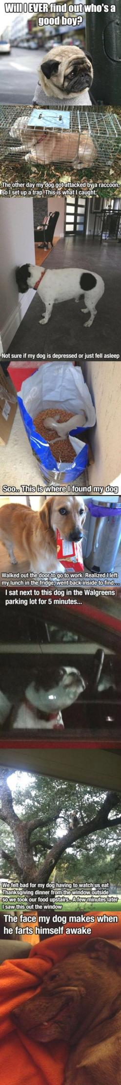I love dogs: Funny Pets, Funny Dogs, Funny Dog Pics, Funny Dog Shaming, Hilarious Dogs, Funny Animal, Funny Puppies, Dogs Funny, Puppys Funny