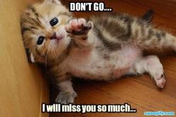 I Miss You So Much: Animals, Funny Cats, Funny Stuff, Don T, Kittens, Funny Animal, Kitty