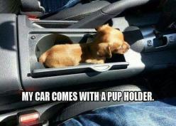 I need a pup. Soon I will have one. Soon.: Car, Animals, Pupholder, Dogs, Pup Holder, So Cute, Puppy, Funny Animal
