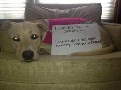 I pooped out a seashell.. These are probably the funniest things I've ever seen. Literally couldn't stop laughing: Animals, Dog Shaming, Funny Stuff, Funnies, Seashells