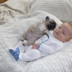 I think this is a French bulldog but this is still too cute to not repin.: Babies, Animals, Dogs, Sweet, Puppy, Adorable, Kid
