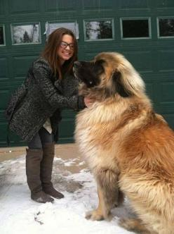 I.... want....this....dog like seriously I want it like more than a horse: Doggie, Animals, Pet, Meet Simba, Puppy, Big Dogs