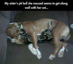 If I tried this with my dog and cat, the photo would be totally different…: Cats, Animals, Sweet, Dogs, Pitbull Love, Pittbull, Friend