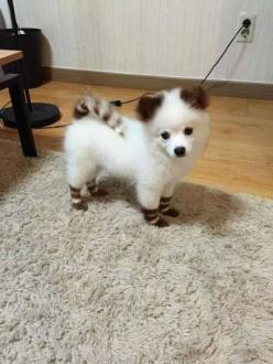 It's a very beautiful Cat/Dog.: Cuteness, Puppies, Animals, Dogs, Pet, Puppys, Adorable
