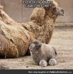 It looks like a rabbit with wheels: Babies, Cuteness, Adorable Animals, Funny, Camels, Creatures, Things, Baby Animals