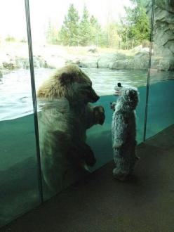 Just died.: Animals, Polar Bears, Polarbear, Funny, Costume, Bear Meet, Photo, Kid