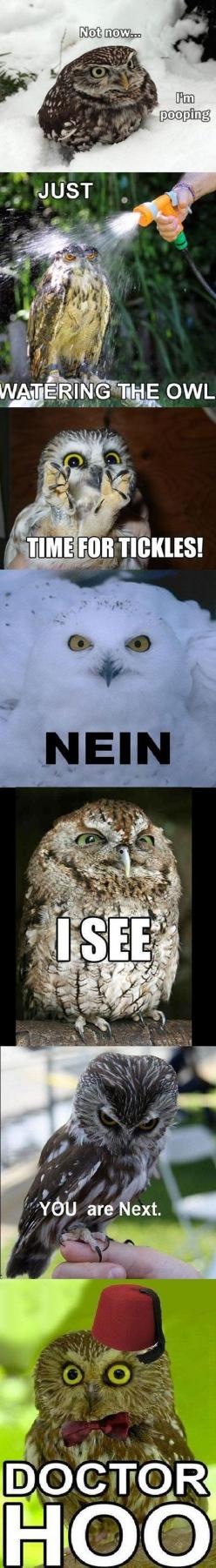 Just some owls doing owl things.: Giggle, Animals, Silly Owls, Owl Humor, Funny Owls, Doctor Hoo, Funnies, So Funny