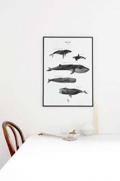 Kētos: a new print in the shop: Interior, Cocolapine Artprint, Cocolapine Bigcartel Com, Theposterclub Com, Products, Kētos, Wall