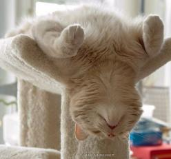 kitty!: Cats, Kitten, Animals, Cat Nap, Funny Cat, Pets, Cat Sleeping, Kitty