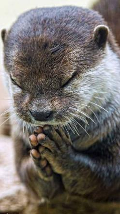 Let everything that has breath praise the Lord. Psalm 150:6: Animals, Wild Life, Google, Prayer Request, Wildlife