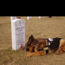 Lex, a German shepherd whose trainer, 20-year-old Marine Corp. Dustin Lee, died in a mortar attack in Falluja in 2007. Lex, who had played with and slept alongside Corp. Lee throughout their service, was also injured in the attack; the dog at first refuse
