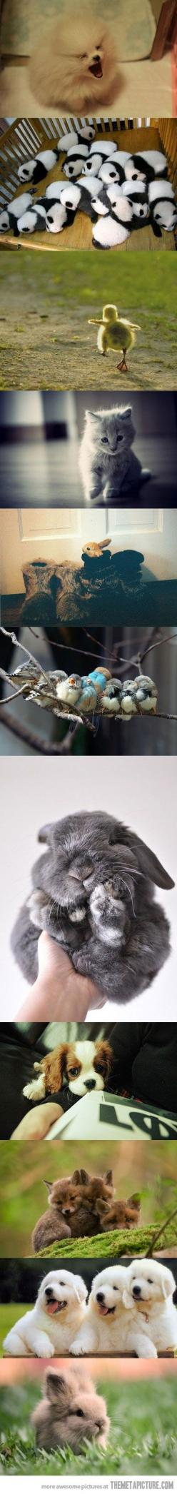 Little balls of fur: Baby Pandas, Babies, Cuteness Overload, Ball, Sweet, Cute Baby Animals, Cute Animals, Box, Cutest Animal
