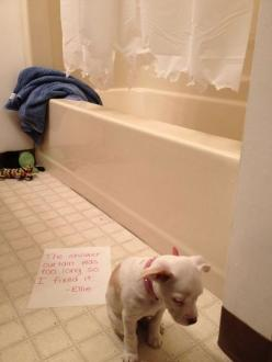 Lmao...dog shaming! One of the best ones I have read: Animals, Dog Shaming, Bad Dog, Puppy, Funny Animal, Shower Curtains, Pet Shaming
