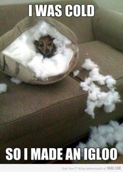 lol - Click the image to find more popular pins at Repinly.com: Animals, Dogs, Pet, Funny Stuff, Funnies, Funny Animal