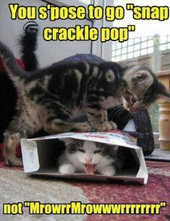 LOL!: Funny Animals, Crackle Pop, Kitten, Funny Cats, Snap Crackle, Funny Stuff, Funnies, Kitty