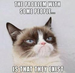 lol! is it bad to say that I think this almost everyday?: Cats, Grumpycat, Some People, Funny Stuff, Humor, Funnies, Grumpy Cat, Animal