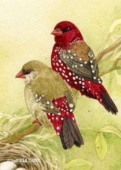 Love finches: Watercolor Birds, Art Watercolor, Finch Family, Beautiful Painting, Art Birds, Archival Watercolor, Bird Art, Beautiful Birds, Animal