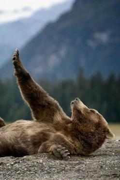{<3} Streching Teddy - By: (Olav Thokle): Wild, Nature, Brown Bears, Morning, Bear Stretch, Very