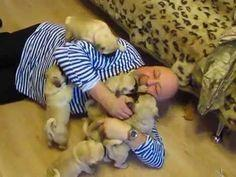 Man's Wildest Dreams Come True as He's Covered With a Pile of Pug Puppies | TIME