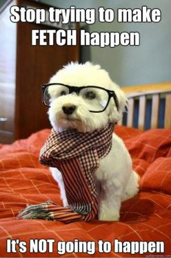 mean girls and hipster dog all in one. It's too much for me: Animals, Dogs, Hipster Puppy, Pet, Funny, Puppys, Things, Hipsterdog