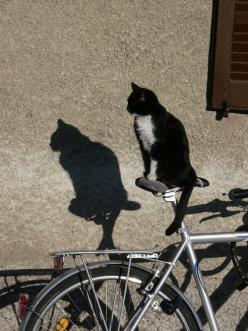 ____ ♫ Music To My Eyes ♬ ____: Cats Tuxedo, Bicycles, Cat Shadows, Animals Cats Small, Kitty Kitty, Bike Cat