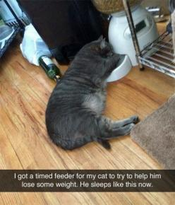 My cat doesn't go quite this far but she will sit in front of it for ~30 mins before each meal time.: Timed Feeder, Poor Kitty, Poor Cat, Funnies, Fat Cats, So Funny, Poor Baby, Animal