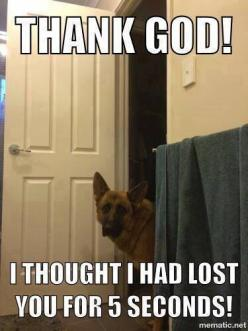 My GSDs all know how to open doors.  No privacy in the bathroom unless you lock the door.  Goes for guests too.: Dogs, Truth, German Shepherds, Velcro Dog, German Shepard, Funny German Shepherd, Gsd, Animal