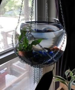 My Hanging Goldfish Bowl by nonsequitur1979, via Flickr: Goldfish Bowl, Betta Fish Bowl, Hanging Goldfish, Idea, Hanging Fish, Fish Tanks, Aquarium, Fishbowl, Fish Bowls