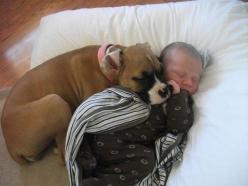 New Friends  Rene C. from Hodges, South Carolina snapped this shot of her 4-month-old boxer puppy and her 2-week-old baby brother, Carson! She says the pup hasn't left his side, even during naptime!: Babies, Animals, Boxer Dogs, Sweet, Baby Brother, Pet,