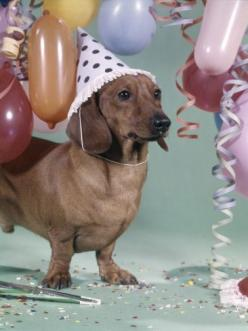 New publication available on - http://animals.beautieswoman.com/: Happy Birthday, Animals, Birthdays, Parties, Doxie, Wiener Dogs, Party, Friend