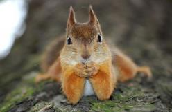 No, I can't tell you. It's a secret.: Critter, Squirrels, Funny, Creatures, Cute Animals, Adorable, Things, Smile, Photo