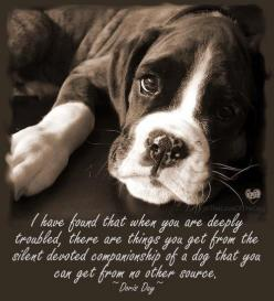 ~ no truer words spoken ~: Animals, Dogs, Quotes, Pet, So True, Boxers, Puppy, Friend