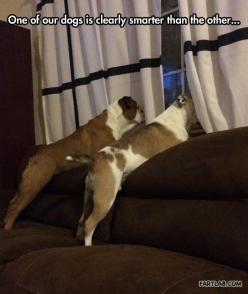 Not the swiftest boxer in the ring, so to speak…: Animals, Dogs, Clearly Smarter, Funny Picture, Funny Stuff, Funnies, Funny Animal