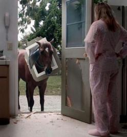 Oh, so the dog door is only for dogs....: Doors, Animals, Horses, Funny Stuff, Humor, Funnies, Funny Animal, Dog