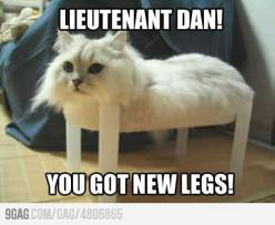 Ok, I seriously hate cats, but this is making me laugh so hard for some reason. Forest Gump voice in my head I guess.: Cats, Animals, Giggle, Forrest Gump, Funny Stuff, Funnies, Humor