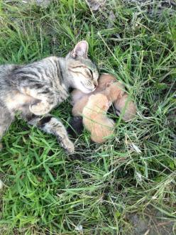 Our farm cat gave us some presents this morning! - Imgur: Farm Animals, Animals Cute, Farms, Animals Group, Cats And Kittens, Adorable Cats, Mornings, Presents