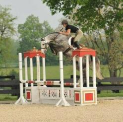 Overachiever haha! This green horse makes sure to clear this oxer.: Overjumping, Funny Horses Jumping, Things Horses, Jumping Horses, Aaahhh Horses, Horse Jumping, Tad Bit, Horse Jumped