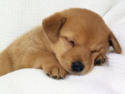 Pet or No Pet, That is The Question???? | Cute Beltz  #Blog: Picture, Puppies, Sweet, Adorable Animals, Pets, Puppys, Baby, Sleeping, Cute Dogs