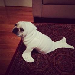 Photo: Halloween Costume, Seals, Animals, Costumes, Dogs, Pet, Funny